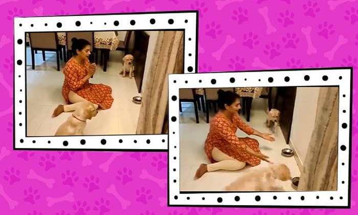 Puppies Are Praying To God Before Eating Netizens Shocked Viral Video-వైరల్ వీడియో…. అచ్చం మనుషుల్లా కుక్క పిల్లలు చేసిన పనికి అవ్వాక్కైన నెటిజన్లు-General-Telugu-Telugu Tollywood Photo Image-TeluguStop.com