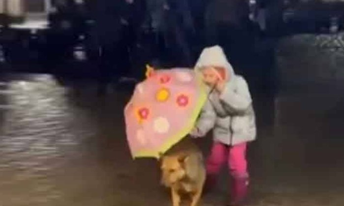 Viral Video Dog Stomping On The Road In Heavy Rain What Did That Child Do With It-వైరల్ వీడియో: జోరు వర్షంలో రోడ్డుమీద తడుస్తూ కుక్క.. దాంతో ఆ చిన్నారి ఏం చేసిందంటే..-General-Telugu-Telugu Tollywood Photo Image-TeluguStop.com