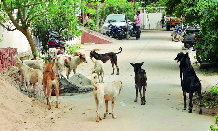 Ap Govt Decided To Vaccinate Stray Dogs In The State-TeluguStop.com