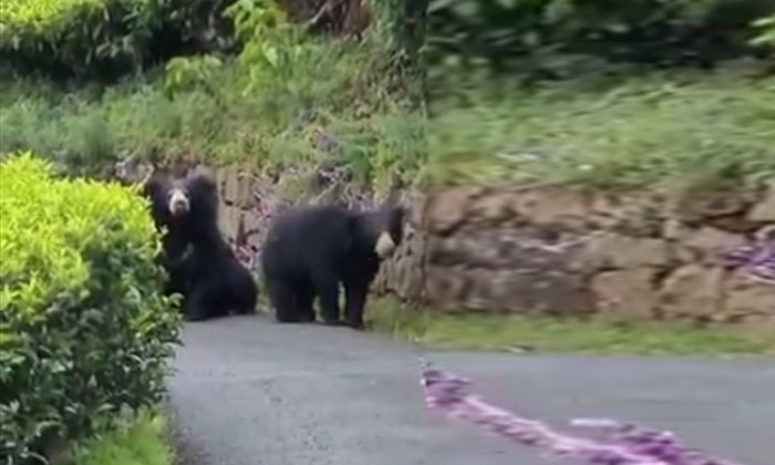 Viral Video Bear Attack While Man Is Taking Video-TeluguStop.com