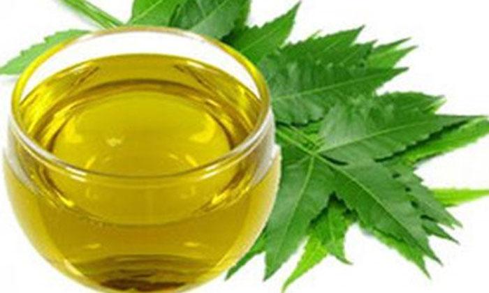 Neem Oil Helps To Get Rid Of Dandruff Naturally-TeluguStop.com