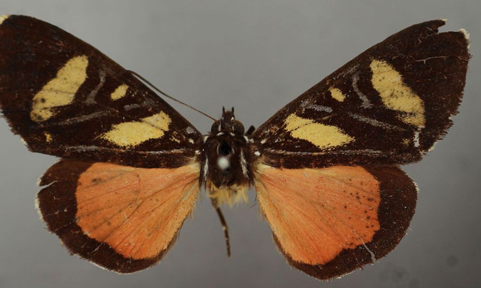 Oh No Is It Really A Butterfly Or Something-అరెరే: ఇది నిజంగా సీతాకోకచిలుకన లేక ఆకా..-General-Telugu-Telugu Tollywood Photo Image-TeluguStop.com