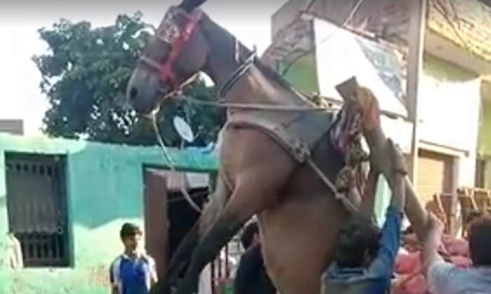 Viral Video A Horse Hanging In The Gall For A Mistake Made By A Man-TeluguStop.com