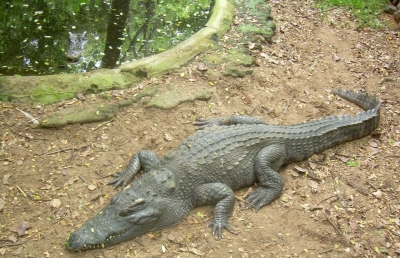 Hyderabad Zoo Successfully Breeding Endangered Species-TeluguStop.com