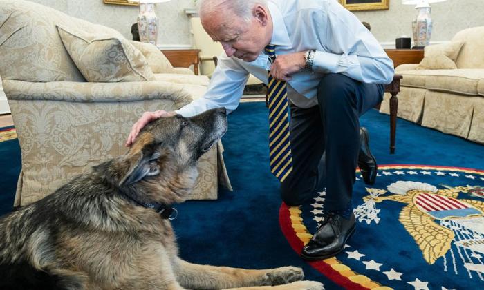 Joe Bidens Dog Champ Cherished Companion For 13 Years Dies-TeluguStop.com
