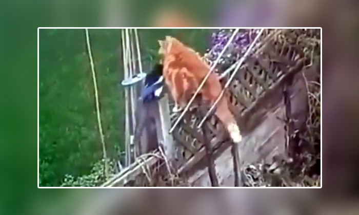 Viral Video Birds Fight With The Cat Attacked On Birds Nest-TeluguStop.com