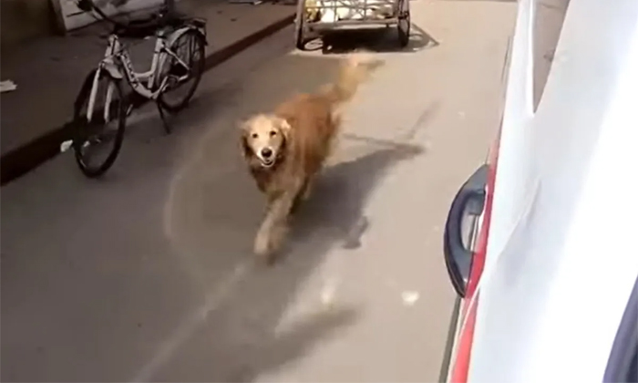 Viral Video Dog Follows Owner In Ambulance In Turkey-TeluguStop.com