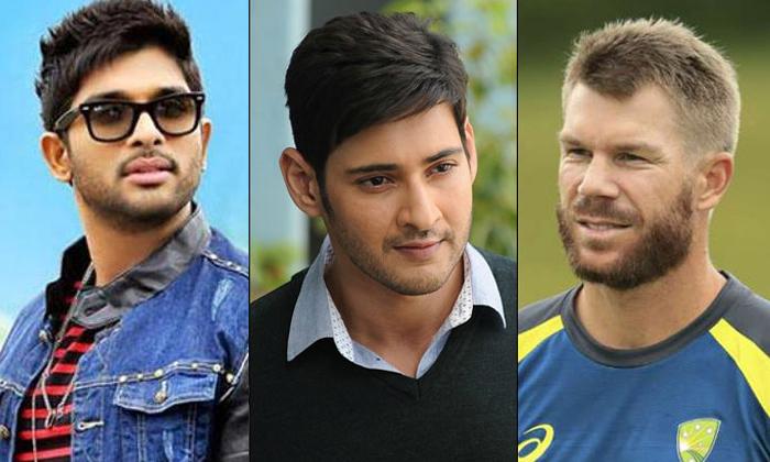Telugu Allu Arjun, Australia, Australian Cricketer David Warner React About His Favorite Heroes In Tollywood, David Warner, Mahesh Babu, Tollywood-Movie
