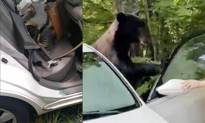 Man Risks Life As He Tries To Scare Away Bear That Broke Into His Car-TeluguStop.com