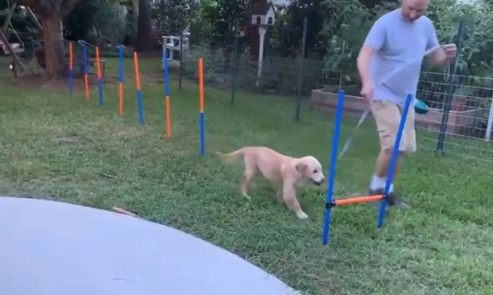 This Dog Video Perfectly Reflects Our Monday Mood-TeluguStop.com
