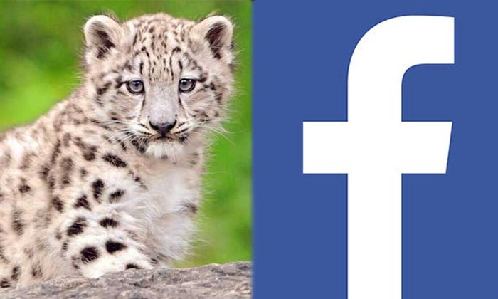 Posted On Facebook As If Selling A Leopard Cub What Is The End-TeluguStop.com