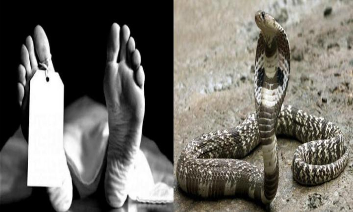 Viral Snakebite Deaths Causing A Stir In That District-TeluguStop.com
