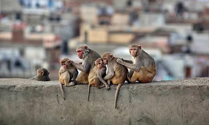 Telugu #chinavirus, Monkey Virus In China, Vaccine-Latest News - Telugu