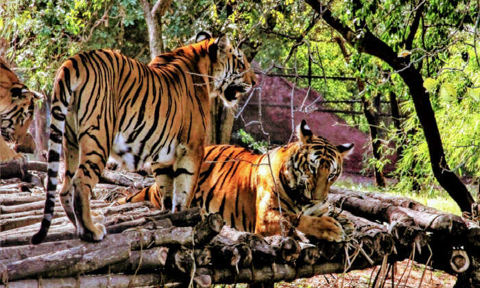 Zoos And Wildlife Sanctuaries In Telangana Reopens From Today-TeluguStop.com