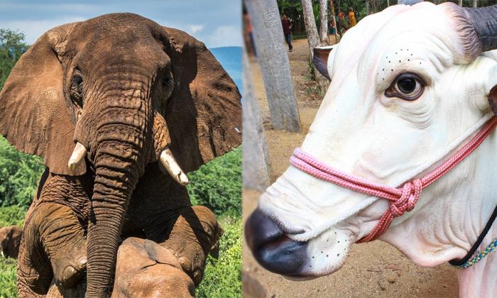Telugu Animals, Animals In Dreams, Black Dog, Camel, Dogs, Dreams, Elephant, Laxmi, Life Problems, Ox, Results, White Dog-Telugu Bhakthi