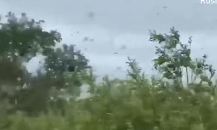 Driver Captures Tornado Of Swarming Mosquitoes In East Russia-TeluguStop.com