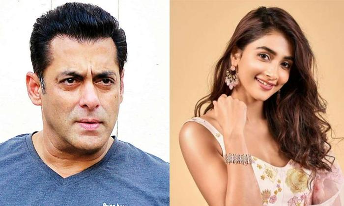 Pooja Hegde Comments On Salman Khan Goes Viral-TeluguStop.com