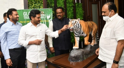 Tiger Numbers In Andhra Rise From 47 To 63-TeluguStop.com