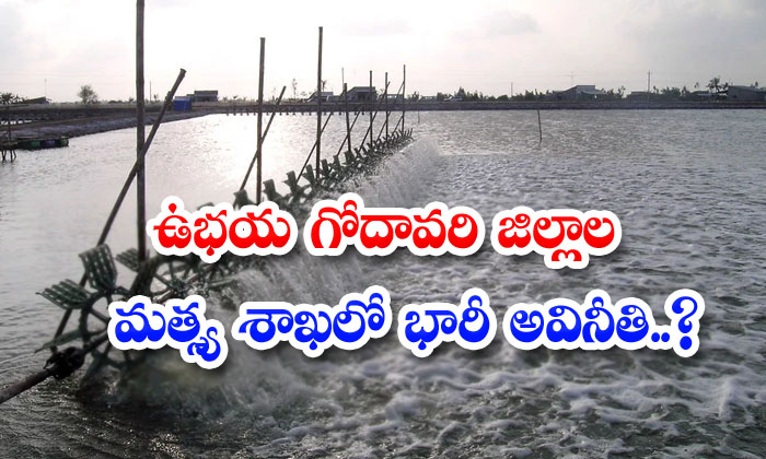 Massive Corruption In The Fisheries Department Of Both The Godavari Districts-TeluguStop.com