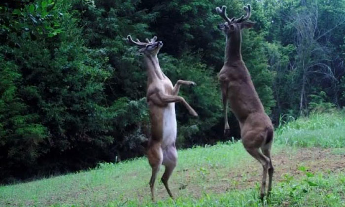 Deer That Have Become Aliens Do You Know Why-TeluguStop.com