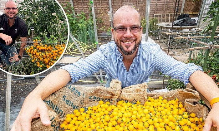 British Man Makes World Record By Growing Over 839 Cherry Tomatoes On Single Stem-TeluguStop.com