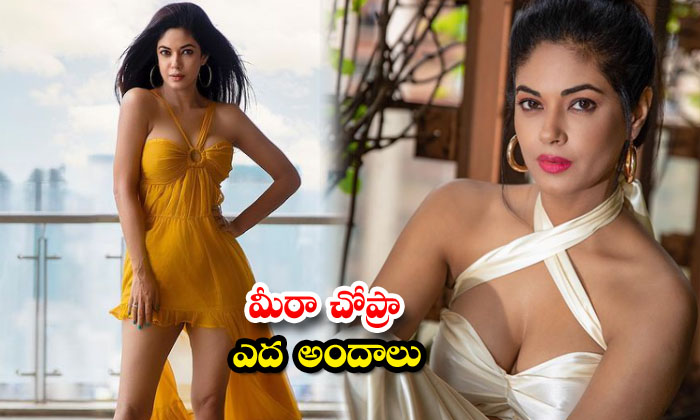 These glamorous pictures of Actress Meera Chopra-మీరా చోప్రా ఎద అందాలు