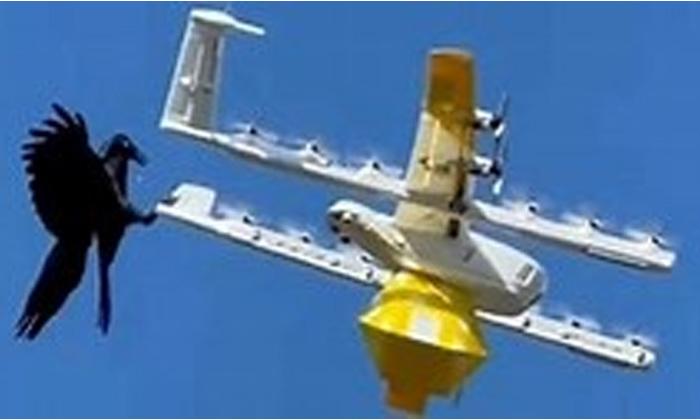Viral Latest Viral News Social Media Viral Photos Drone Bird Attack-TeluguStop.com
