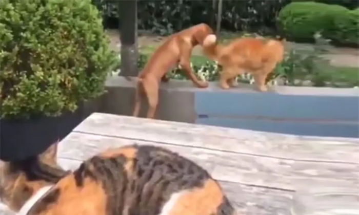 Viral Video Shock To See The Work Done By The Cat For The Dog-TeluguStop.com
