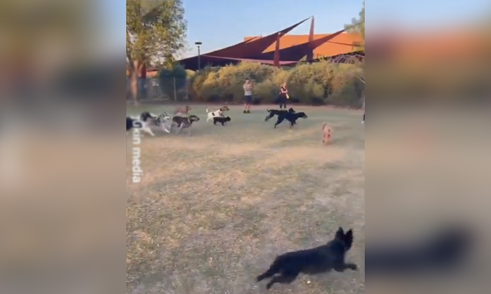 Viral Video Toy Maker Threatening Dogs-TeluguStop.com