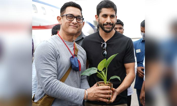 Bollywood Hero Ameer Khan Planted Trees In Begumpet Airport-TeluguStop.com