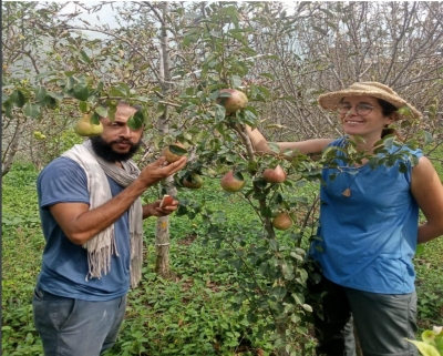 Himachal's Climate-resilient Agriculture Attracts Foreigners-TeluguStop.com