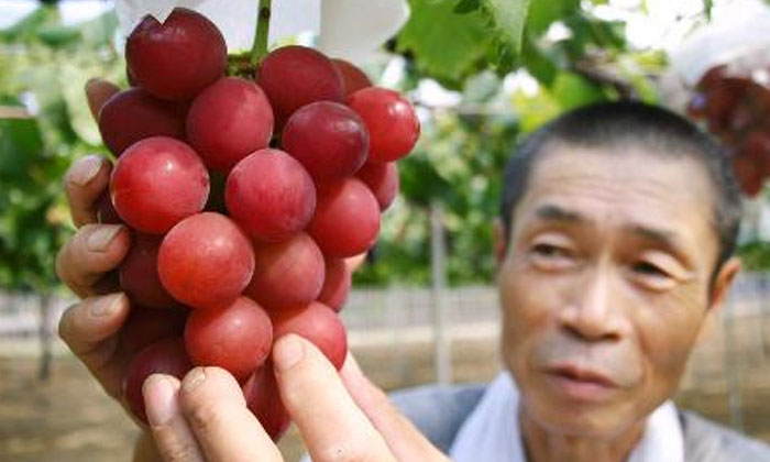 How Many Lakhs Of A Bunch Of These Grapes-TeluguStop.com