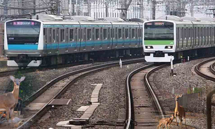 Japan Trains Sound Horn Be Like Dogs Barking Because-TeluguStop.com