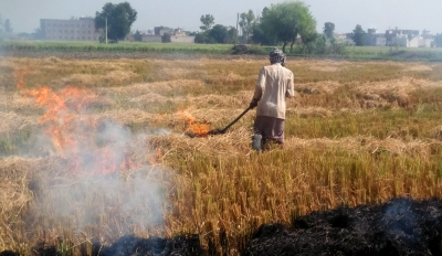 Punjab Appoints 8,500 Nodal Officers To Monitor Stubble Burning-TeluguStop.com