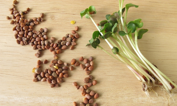 Radish Seeds Helps To Reduce Pimple Marks Naturally-TeluguStop.com