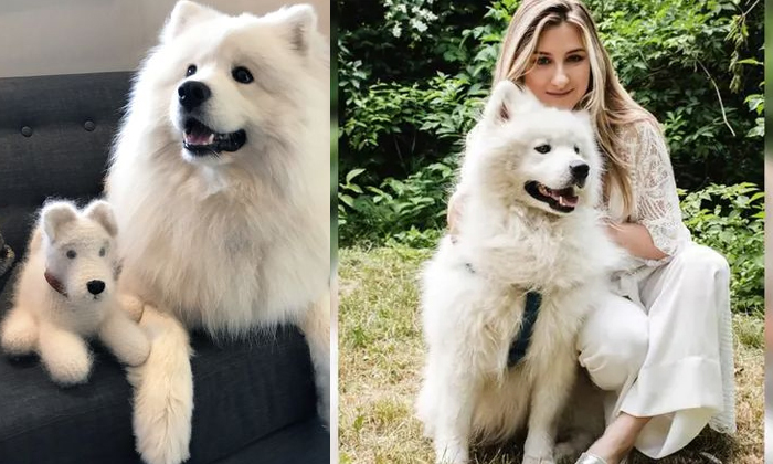 The Viral Pet Owner Who Made Scarf Out Of Her Pet Dogs Fur-TeluguStop.com